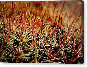 Complexity Of Nature Canvas Print by Vicki Pelham