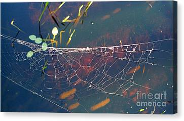 Canvas Print featuring the photograph Complexity Of The Web by Nina Prommer