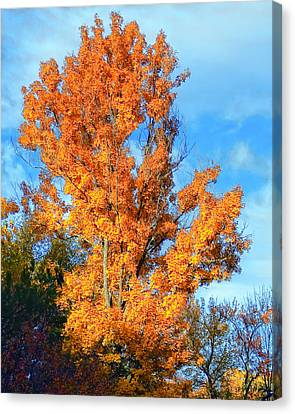 Complimentary Colors Canvas Print by Michael Putnam