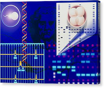 Computer Artwork Depicting Embryo Paternity Test Canvas Print