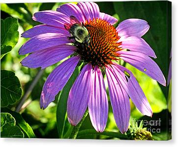 Canvas Print featuring the photograph Cone Bee by Nava Thompson