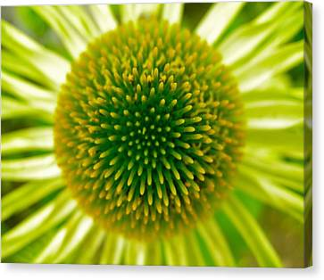 Cone Of The Cone In Lime Canvas Print by Randy Rosenberger