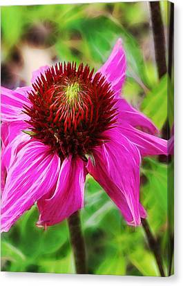 Coneflower Canvas Print by Judi Bagwell