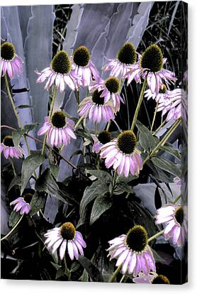 Coneflowers In Abstract Canvas Print by Beth Akerman