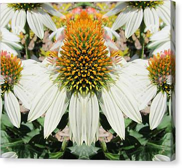 Coneflowers Canvas Print by Michele Caporaso