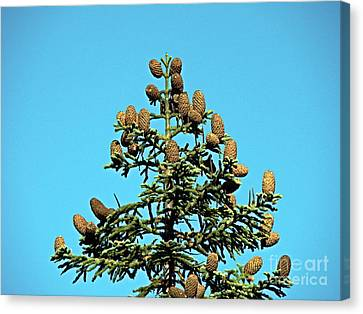 Canvas Print featuring the photograph Cones by Nick Kloepping
