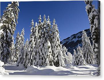 Coniferous Forest In Winter Canvas Print by Konrad Wothe