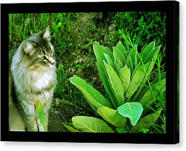 Canvas Print featuring the photograph Contemplating The Nature Of Mullein by Susanne Still