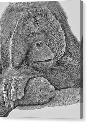 Ape Canvas Print - Contemplation by Larry Linton