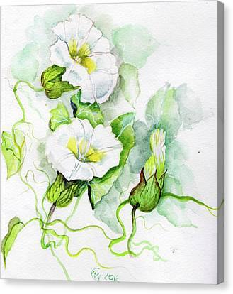 Convolvulus Canvas Print by Angelina Whittaker Cook