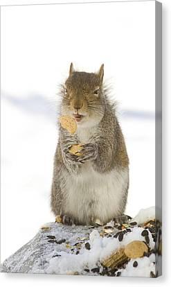 Cookie Squirrel Canvas Print