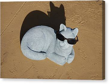 Canvas Print featuring the photograph Cool Cat by Aimee L Maher Photography and Art Visit ALMGallerydotcom