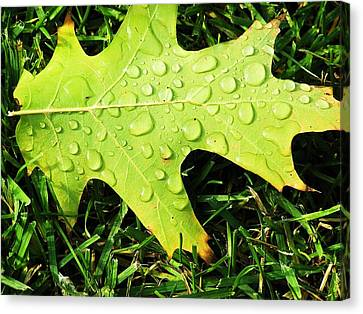 Cool Morning Dew Canvas Print