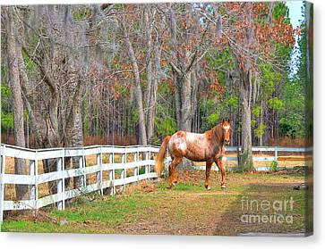 Coosaw - Outside The Fence Canvas Print by Scott Hansen