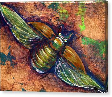 Copper Beetle Canvas Print by Ashley Kujan