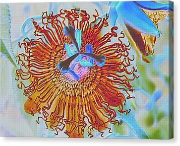 Copper Passionflower Canvas Print by Rosalie Scanlon