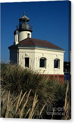 Coquille Light Canvas Print by Sharon Elliott