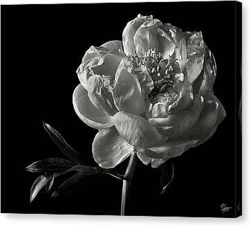 Canvas Print featuring the photograph Coral Peony In Black And White by Endre Balogh