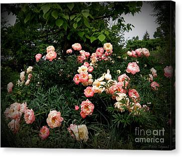 Canvas Print featuring the photograph Coral Peony by Tanya  Searcy
