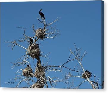 Canvas Print featuring the photograph Cormorant Condos by Stephen  Johnson