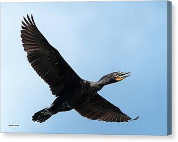Cormorant Flying Over Duck Lake Canvas Print