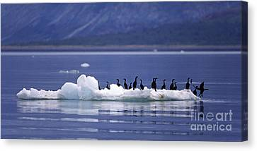 Canvas Print featuring the photograph Cormorants On Ice Floe - Glacier Bay Alaska by Craig Lovell