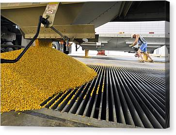 Corn At An Ethanol Processing Plant Canvas Print by David Nunuk