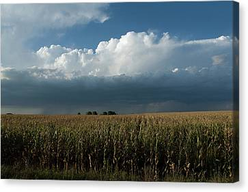 Corn Country Canvas Print