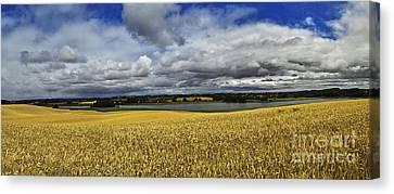Corn Field Panorama Canvas Print by Heiko Koehrer-Wagner