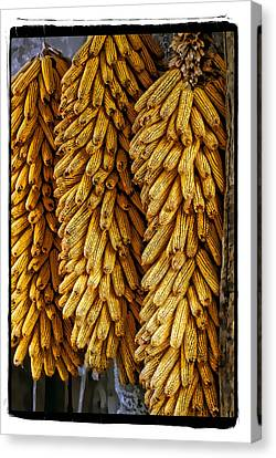 Corn  Canvas Print by Mauro Celotti