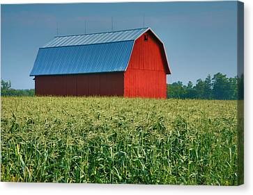 Cornfield And Red Barn Canvas Print