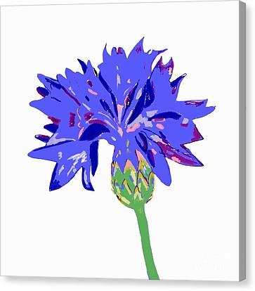 Cornflower Canvas Print by Barbara Moignard