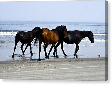 Corolla Beach Horses Canvas Print
