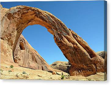 Corona Arch Canvas Print by Julie Rideout