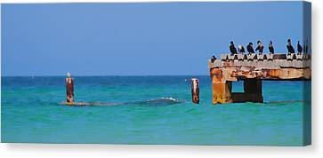Cortez Beach Canvas Print by Betsy Knapp