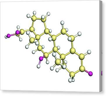 Corticosterone Hormone Molecule Canvas Print by Dr Tim Evans