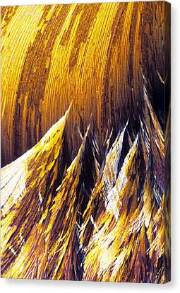 Cortisol Crystals, Light Micrograph Canvas Print