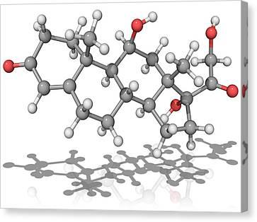 Cortisol Hormone, Molecular Model Canvas Print