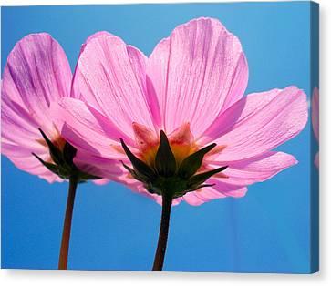Cosmia Flowers Pair Canvas Print by Sumit Mehndiratta