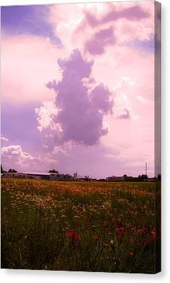 Cotton County Landscape Canvas Print by Toni Hopper