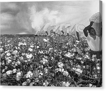 Cotton Field Canvas Print by Belinda Threeths