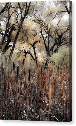 Cottonwoods And Cat Tails Canvas Print by Denice Breaux