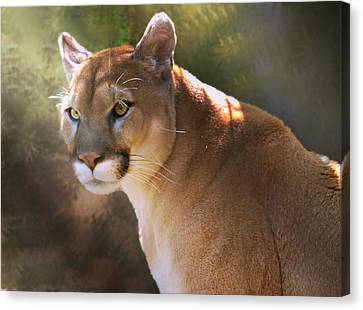 Canvas Print featuring the digital art Cougar by Mary Almond