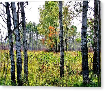 Country Autumn Canvas Print by Marilyn Smith
