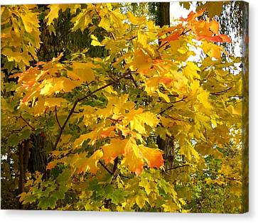 Country Color 10 Canvas Print by Will Borden