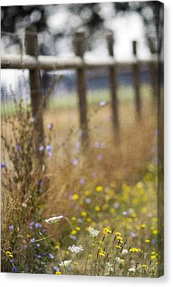Country Fence Canvas Print by Rebecca Cozart