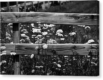 Country Flowers In Black And White Canvas Print by Theresa Johnson