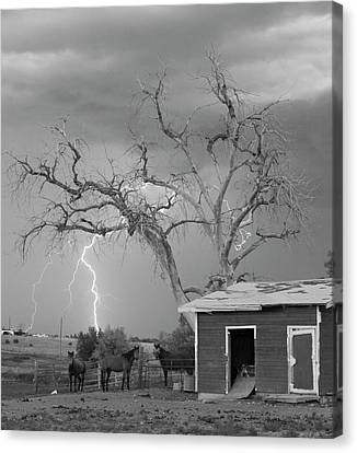 Country Horses Lightning Storm Ne Boulder County Co 66v Bw Canvas Print by James BO  Insogna