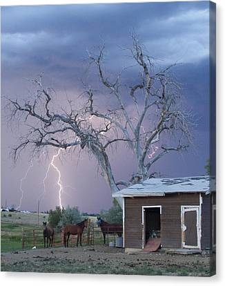 Country Horses Lightning Storm Ne Boulder County Co 66v Canvas Print by James BO  Insogna