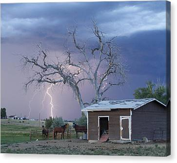 Country Horses Lightning Storm Ne Boulder County Co  Crop Canvas Print by James BO  Insogna